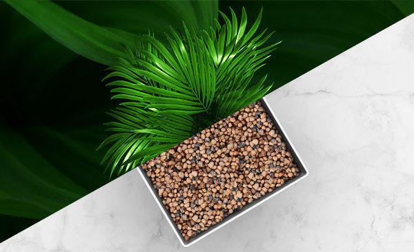 AR App for Office Plants